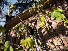uma jovem na escada colhe figos da árvore. foto