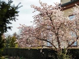 primavera em Estrasburgo, França foto
