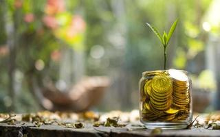 árvore com crescimento no cofrinho de vidro de pilha de moedas de ouro com fundo desfocado foto