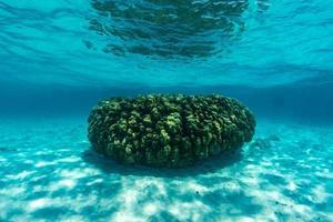 cena subaquática com recifes de coral e peixes. foto