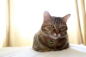 jovem gato malhado foto