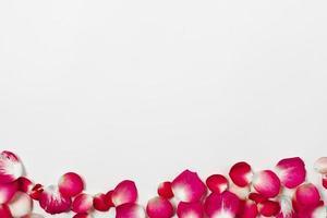 lindas pétalas de rosa. conceito de foto bonita de alta qualidade