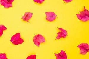 linda flor fresca desabrochando isolada no fundo do papel foto