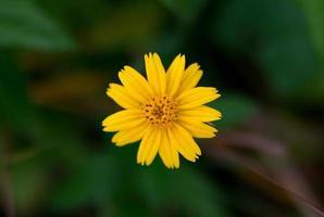 beleza da natureza e flores foto