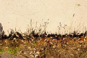 projeção de sombras de grama selvagem foto