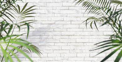 parede de tijolo branco com folha de palmeira foto
