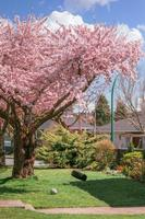 retrato panorâmico de uma cerejeira com balanço em um parque público foto