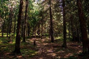 vista através das árvores da floresta, luz do sol sobre a montanha, detalhes da floresta foto