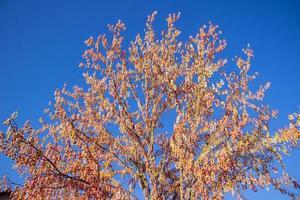 pomerode easter tree em santa catarina foto