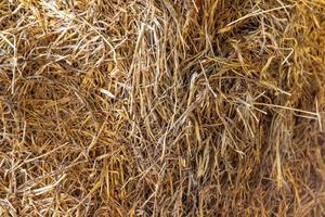 textura de feno dourado para o fundo foto