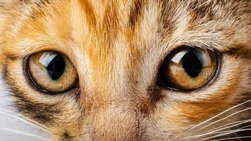 olhos de gato close-up, aparência de gato de estimação foto