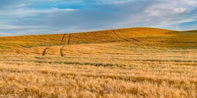 campos mágicos de fazenda de trigo em Palouse Washington foto