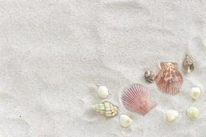 conchas do mar na areia branca foto