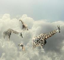 girafa no paraíso foto