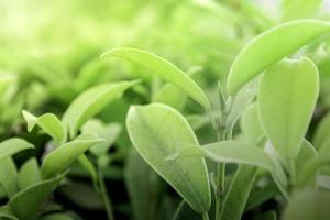 plantas verdes naturais e folhas em graden em parque público foto