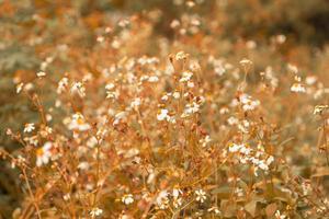 fundo de flores de verão estilo vintage foto