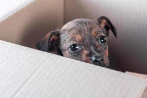 filhote de cachorro triste enjeitado em uma caixa de papelão foto