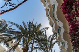 vista inferior das folhas de palmeira contra o céu azul foto