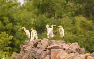 pássaros sentados nas rochas, grupo de pássaros foto