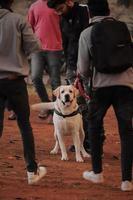 cachorro olhando para outros cachorros no parque, cachorro no parque de cachorros, amante de animais de estimação foto