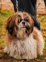 cachorrinho, cachorro no parque de cachorros, amante de animais de estimação foto