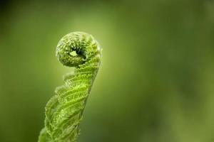 close up folhas verdes natureza foto