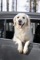 cachorro bonito ao ar livre. cão sorridente fofo ao ar livre foto