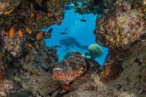 peixes nadam no mar vermelho, peixes coloridos, eilat israel foto