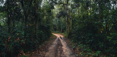 estrada de terra para a floresta na estação das chuvas tropicais foto