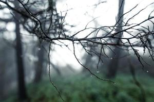 árvores e samambaias na floresta do dia chuvoso foto