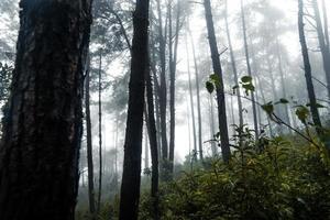 floresta no dia nublado e chuvoso, samambaias e árvores foto