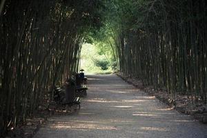 caminho de cascalho no meio de um matagal de bambu com alguns bancos para foto