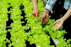 jardineiros e alface orgânica na trama alimentação saudável foto