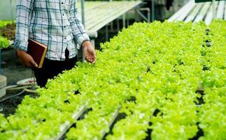 jardineiros e alface orgânica na trama conceito de alimentação saudável foto