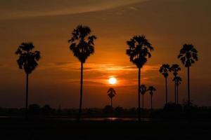 silhueta das palmeiras ao pôr do sol foto