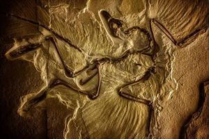 fóssil de esqueleto de dinossauro pré-histórico foto