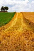 agricultura planta espiga campo na natureza foto