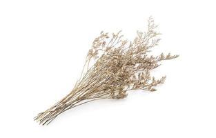 flores caspia secas foto