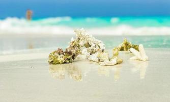 corais de areia branca da praia e conchas nas maldivas do atol de rasdhoo. foto