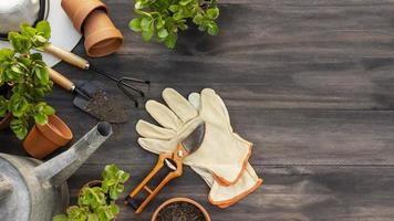 plantas ferramentas de jardinagem close-up. conceito de foto bonita de alta qualidade