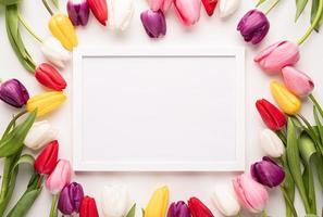moldura branca com tulipas coloridas da primavera, vista superior sobre fundo branco foto