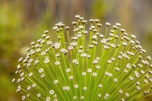 close-up de flor branca foto