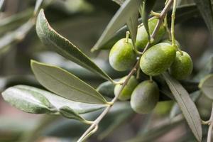 azeitonas verdes com folhas de oliveira foto