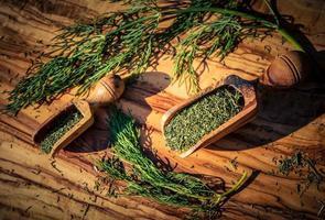 endro anethum graveolens em madeira de oliveira foto