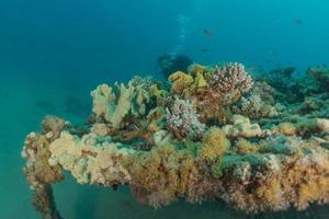 recife de coral e plantas aquáticas no mar vermelho, eilat israel foto