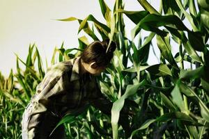 jovem agricultor observando alguns gráficos de milho em campo foto