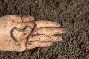 uma mulher carrega um verme em solo fértil de uma fonte natural. foto