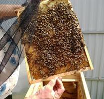 textura de hexágono de fundo, favo de mel de cera de uma colmeia de abelhas foto