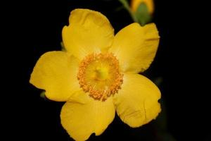 flor close up florescendo fundo botânico foto