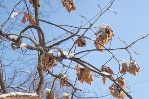um galho com uma folha de carvalho marrom seco e morto no frio foto